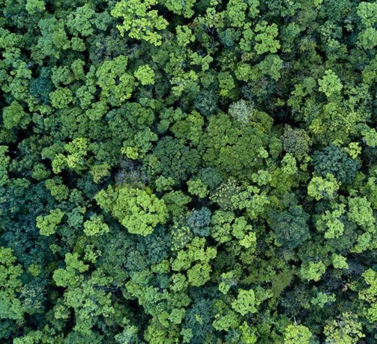 Bujne lasy odgóry